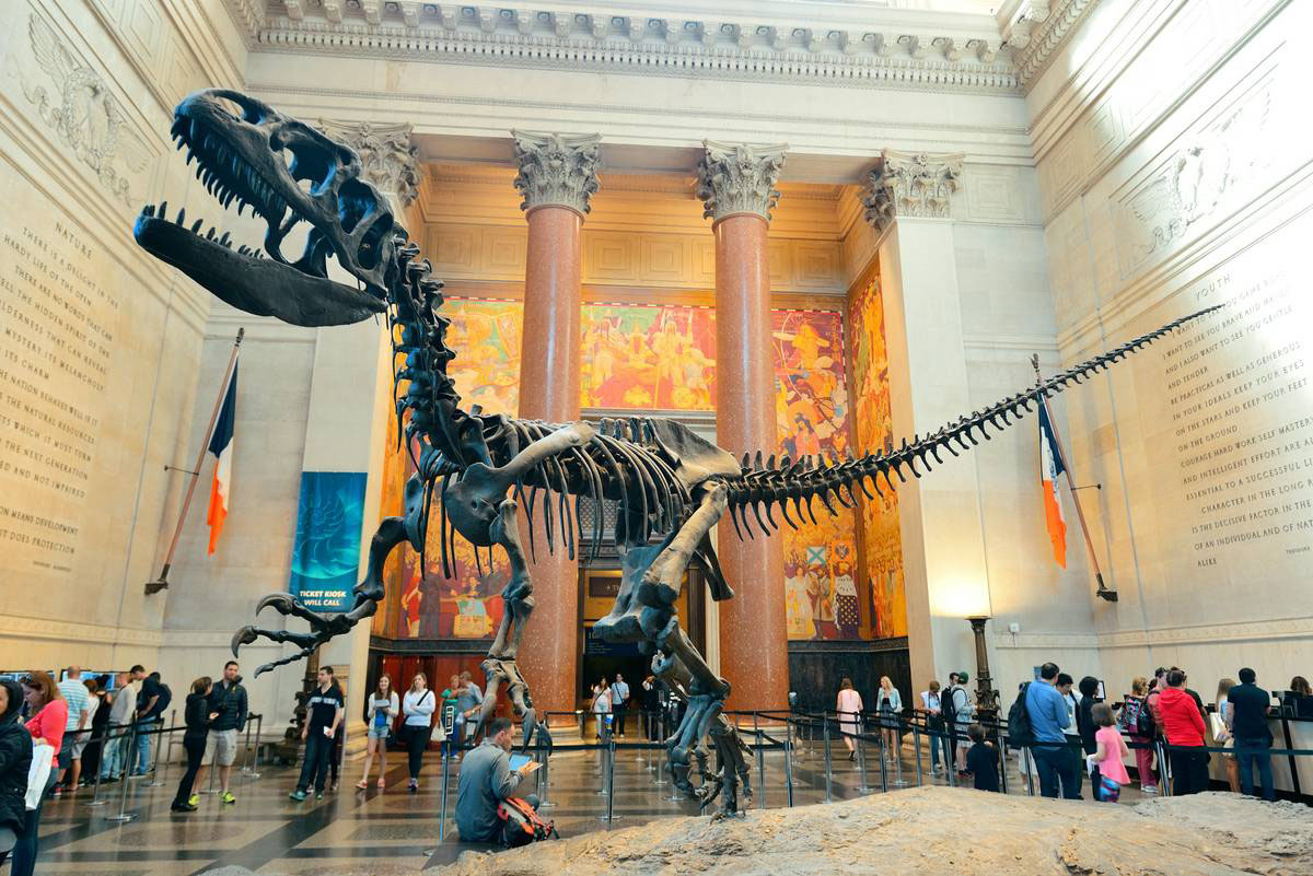 Cheap Things to Do in New York City - AMNH